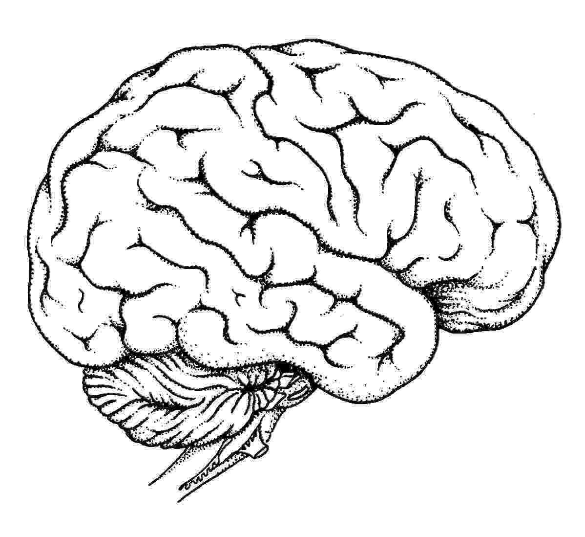 color pictures of the brain printables margaret ann jessop psyd the of color pictures brain
