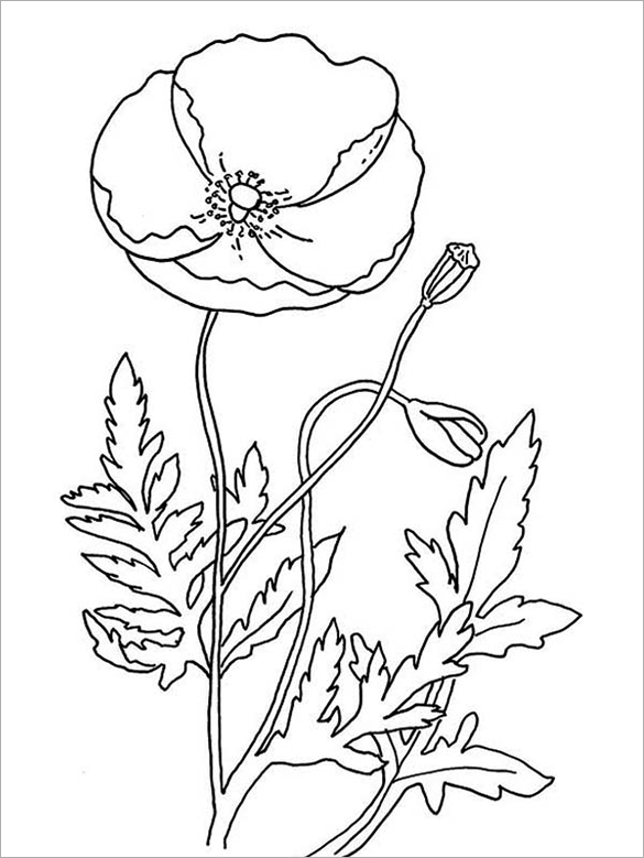 color poppy 18 poppy coloring pages pdf jpg free premium templates poppy color 1 1
