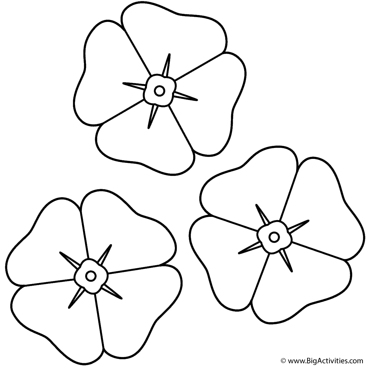 color poppy poppies coloring page remembrance day color poppy