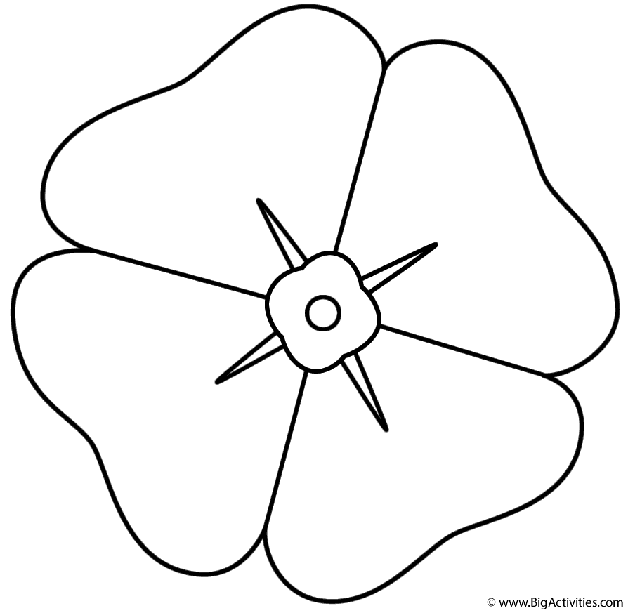 color poppy poppy coloring page remembrance day color poppy