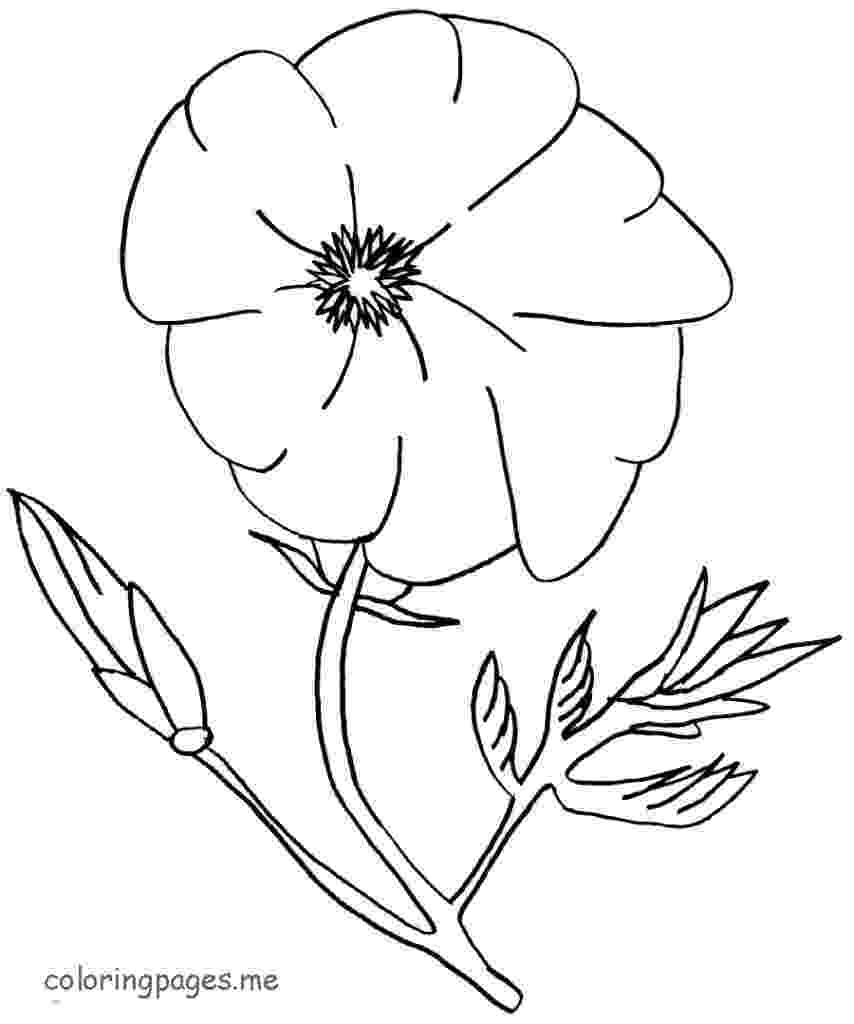 color poppy poppy flowers coloring pages download and print for free color poppy