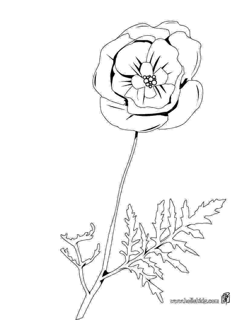 color poppy poppy flowers coloring pages download and print for free poppy color