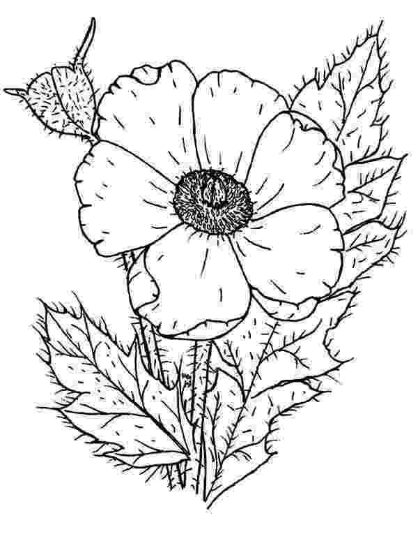 color poppy poppy photo of poppy coloring page girl scouts color poppy