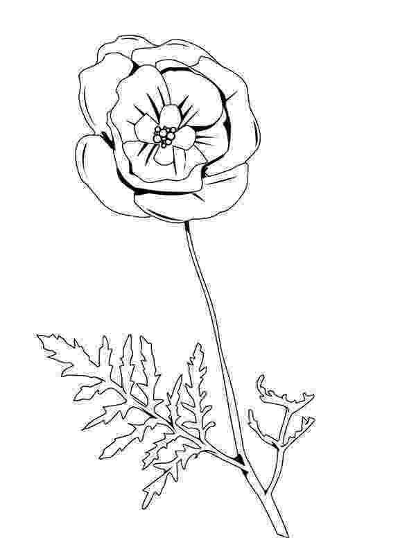 color poppy pretty picture of red poppy coloring page color luna color poppy