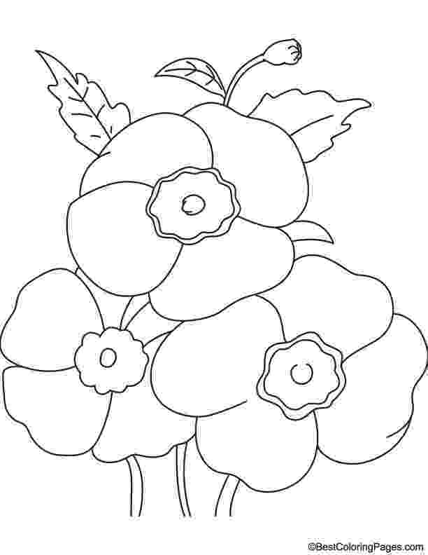 color poppy red poppies coloring page download free red poppies poppy color