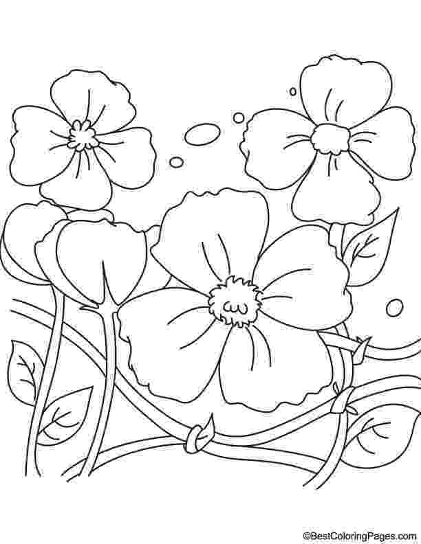 color poppy remembrance day poppies coloring page download free poppy color