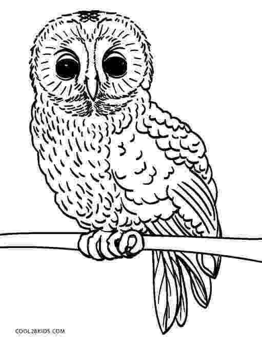 colored pictures of owls couple of cute owls coloring page free printable pictures colored of owls