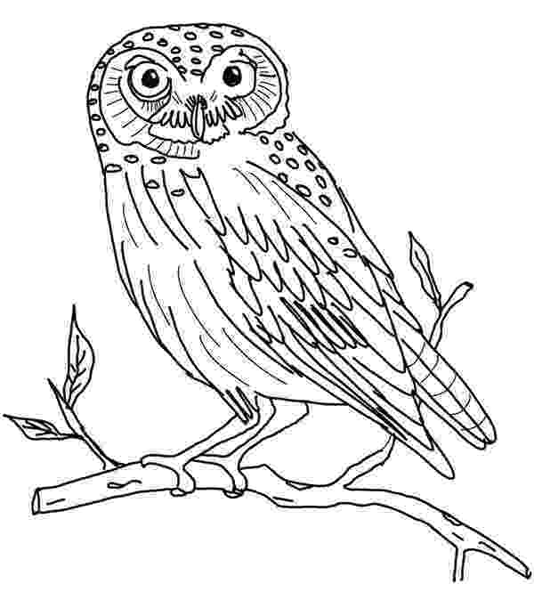colored pictures of owls free owl coloring pages pictures owls of colored 1 1