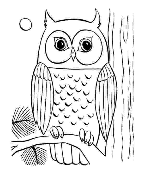 colored pictures of owls owl coloring pages for adults free detailed owl coloring colored owls pictures of