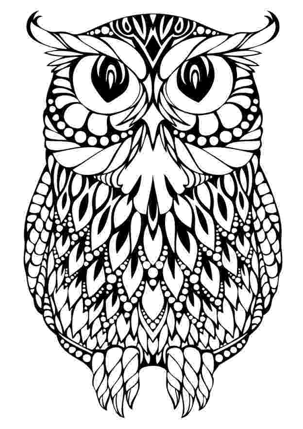 colored pictures of owls owl coloring pages for adults free detailed owl coloring owls colored of pictures