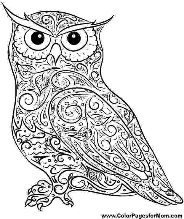 colored pictures of owls owl dreamcatcher owls adult coloring pages of pictures colored owls