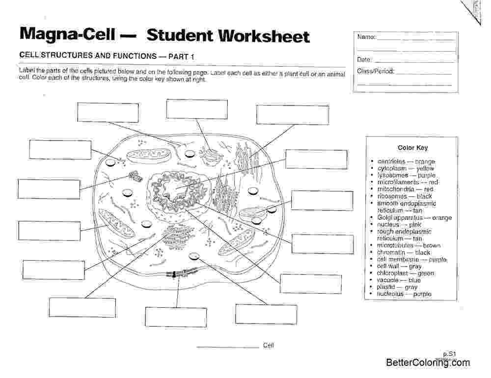 coloring animal cell diagram animal cell coloring animal cell diagram coloring