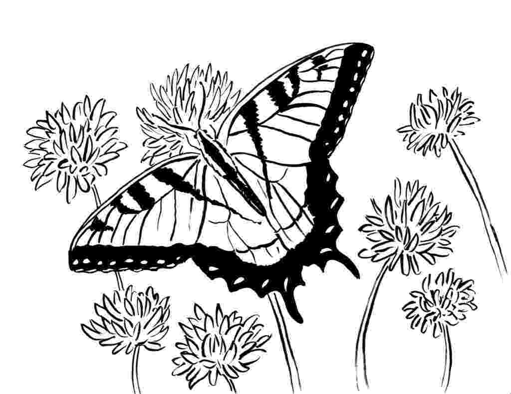 coloring butterfly butterfly coloring pages free download on clipartmag coloring butterfly