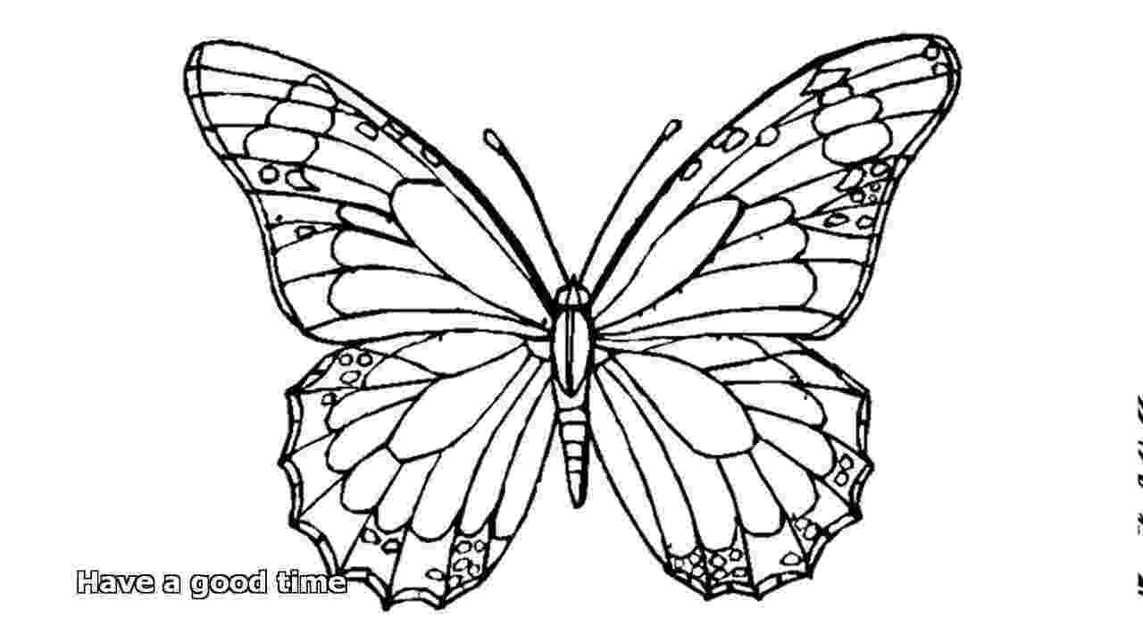 coloring butterfly butterfly coloring pages youtube coloring butterfly