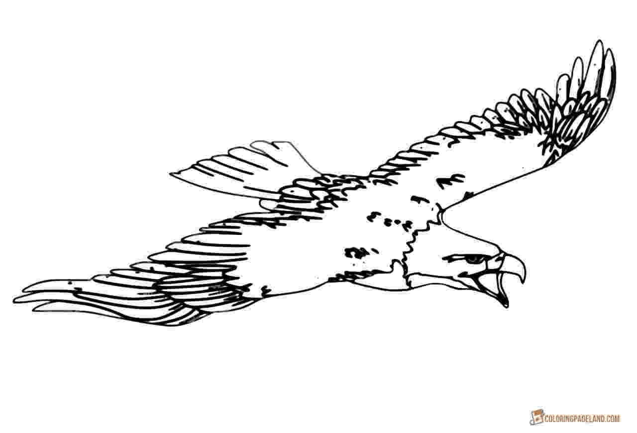 coloring eagle printable bald eagle coloring pages for kids cool2bkids eagle coloring