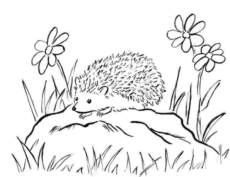 coloring hedgehog hedgehog coloring page getcoloringpagescom hedgehog coloring