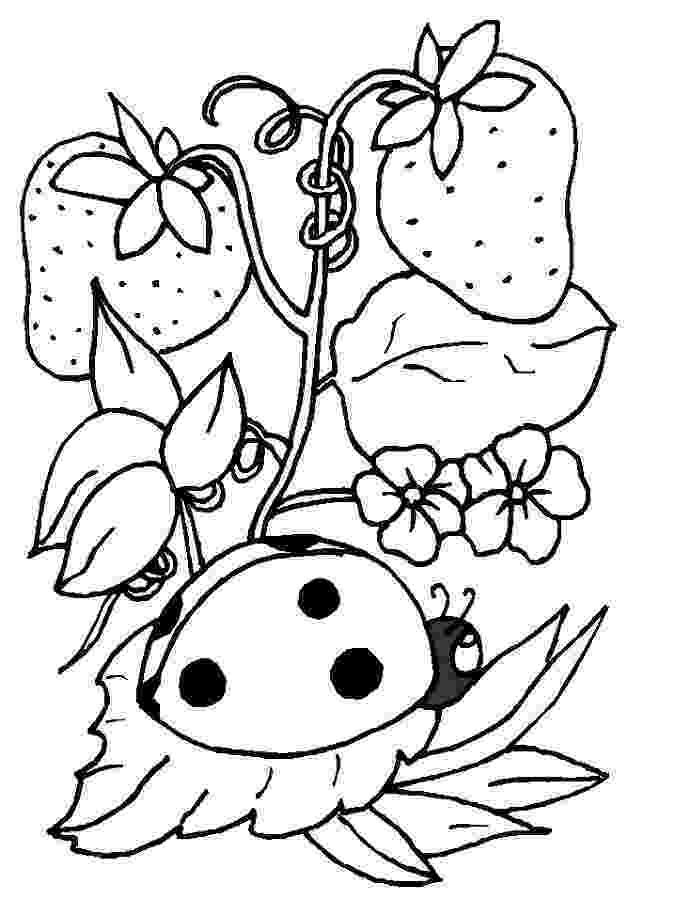 coloring page ladybug ladybug coloring pages free printables momjunction ladybug coloring page