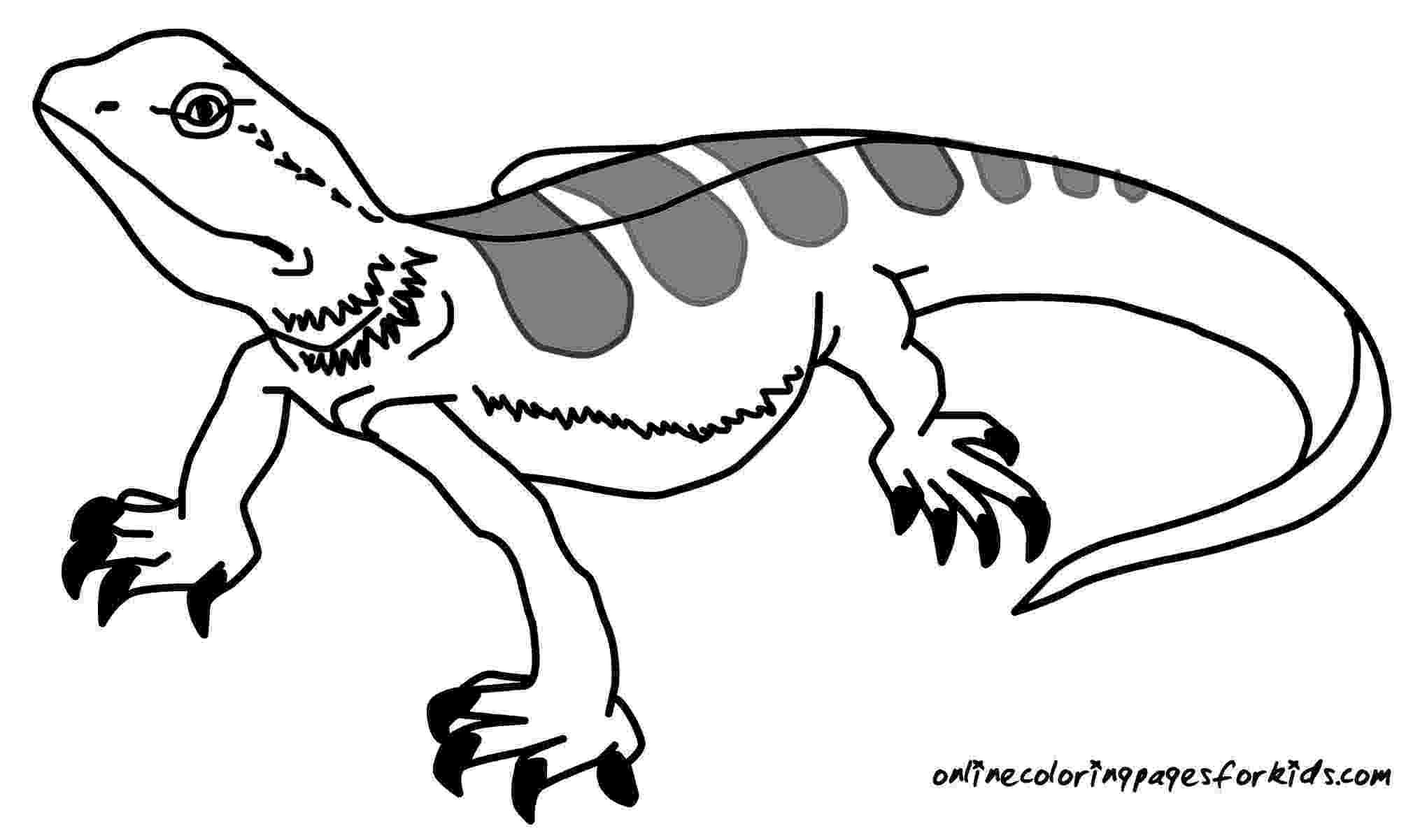 coloring page lizard free printable lizard coloring pages for kids animal place page coloring lizard