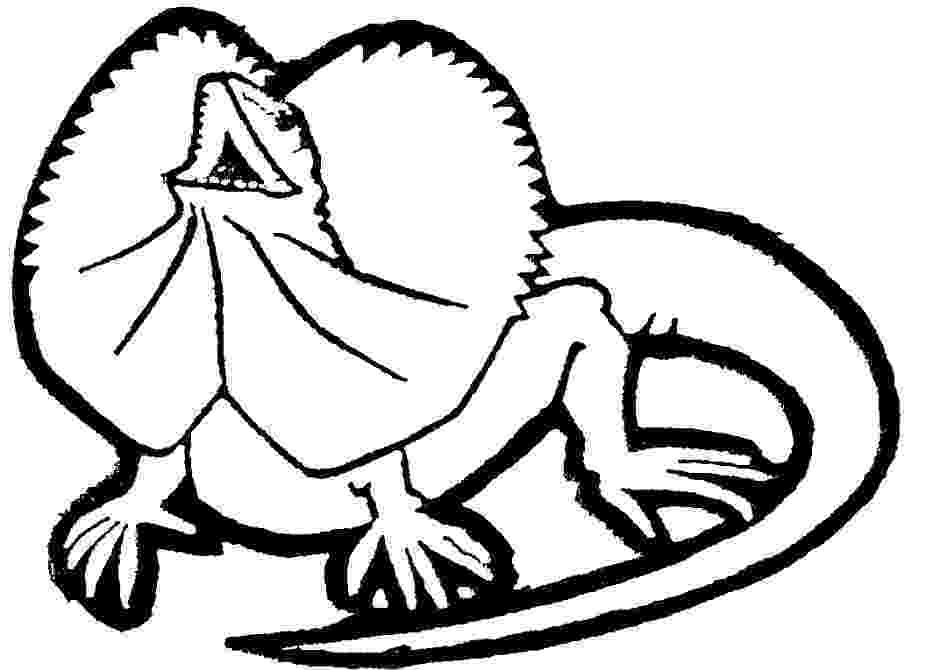 coloring page lizard free printable lizard coloring pages for kids coloring lizard page 1 1
