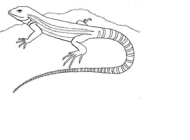 coloring page lizard lizard coloring pages to download and print for free coloring lizard page