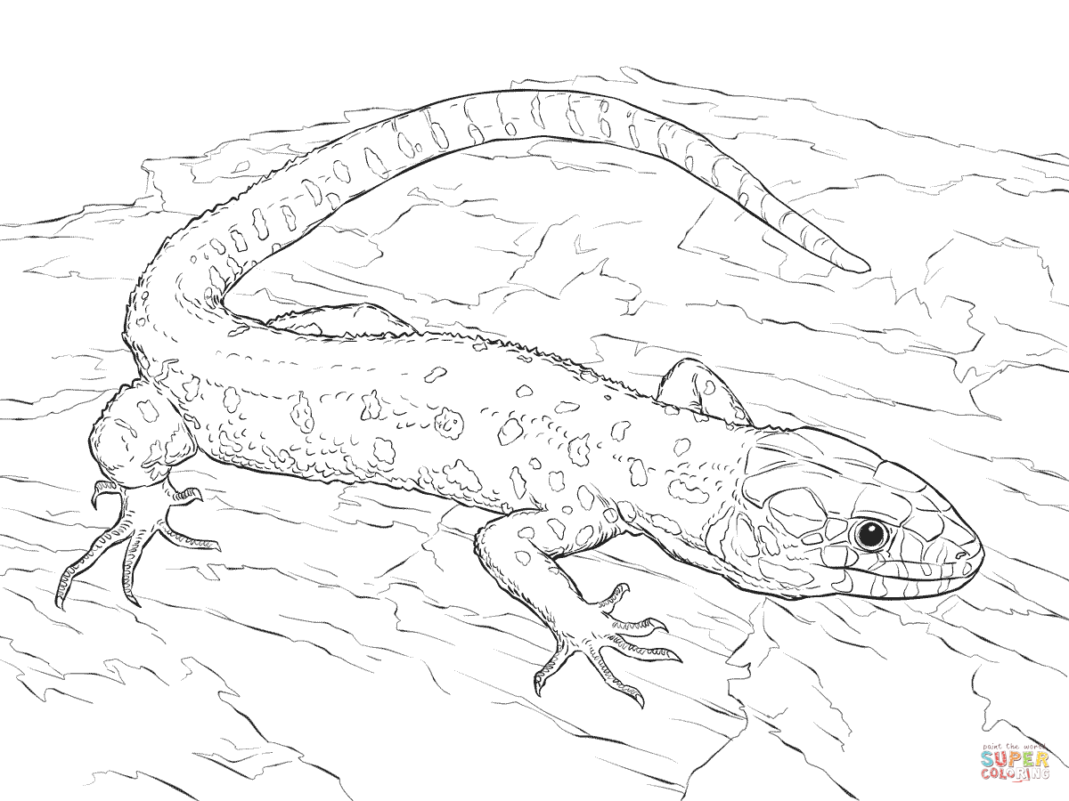 coloring page lizard lizard coloring pages to download and print for free page lizard coloring