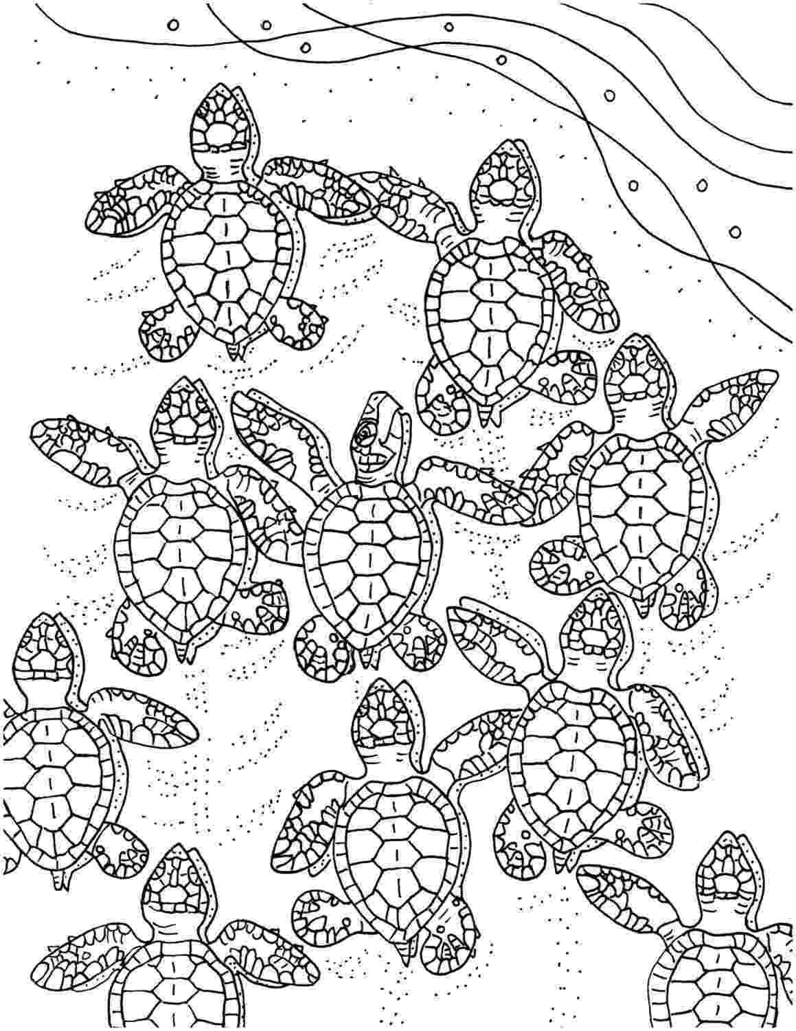 coloring page of turtle baby sea turtles coloring page embroidery pattern sea of coloring page turtle