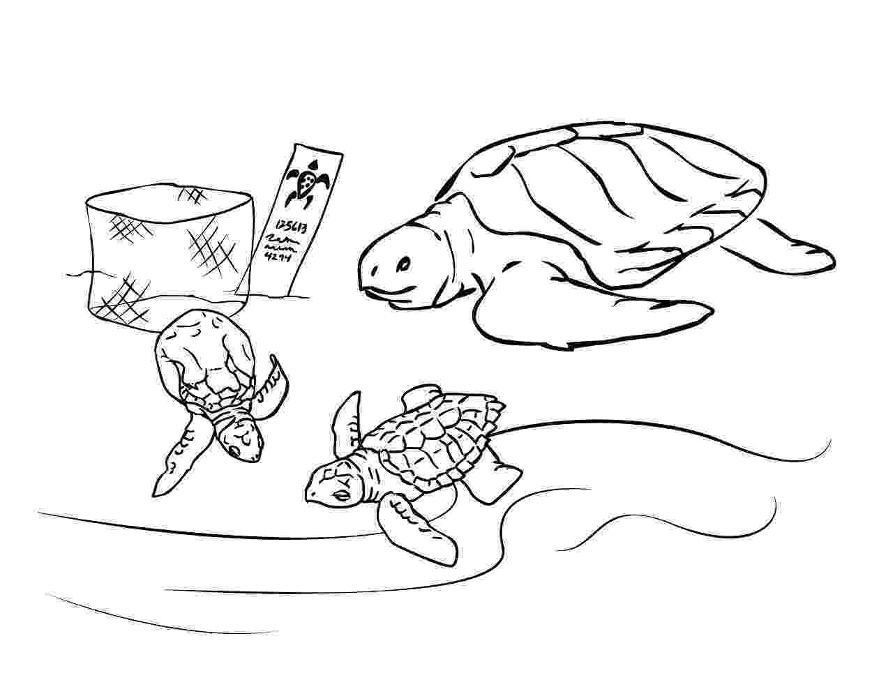 coloring page of turtle free printable sea turtle coloring pages for kids page turtle of coloring