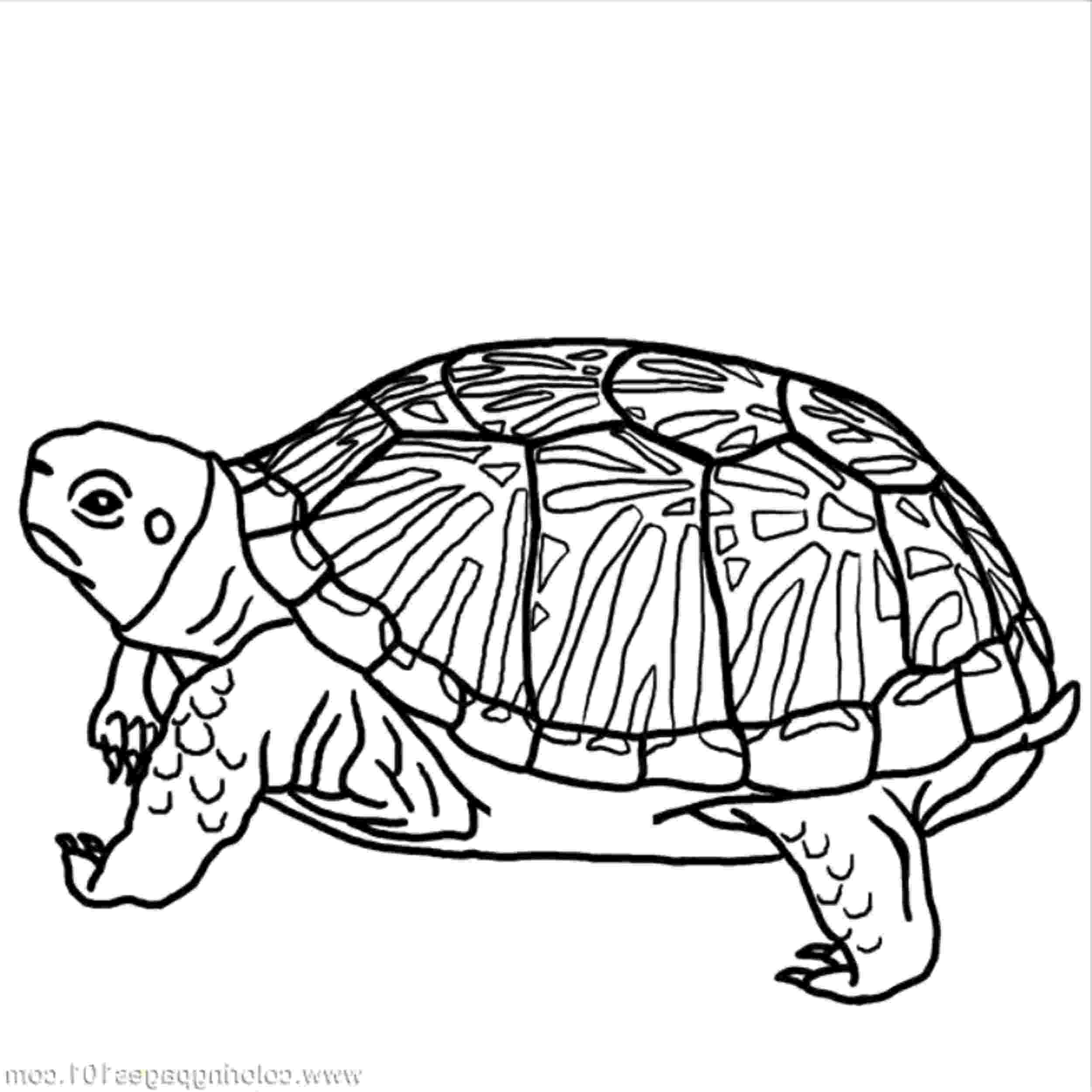 coloring page of turtle print download turtle coloring pages as the coloring of page turtle