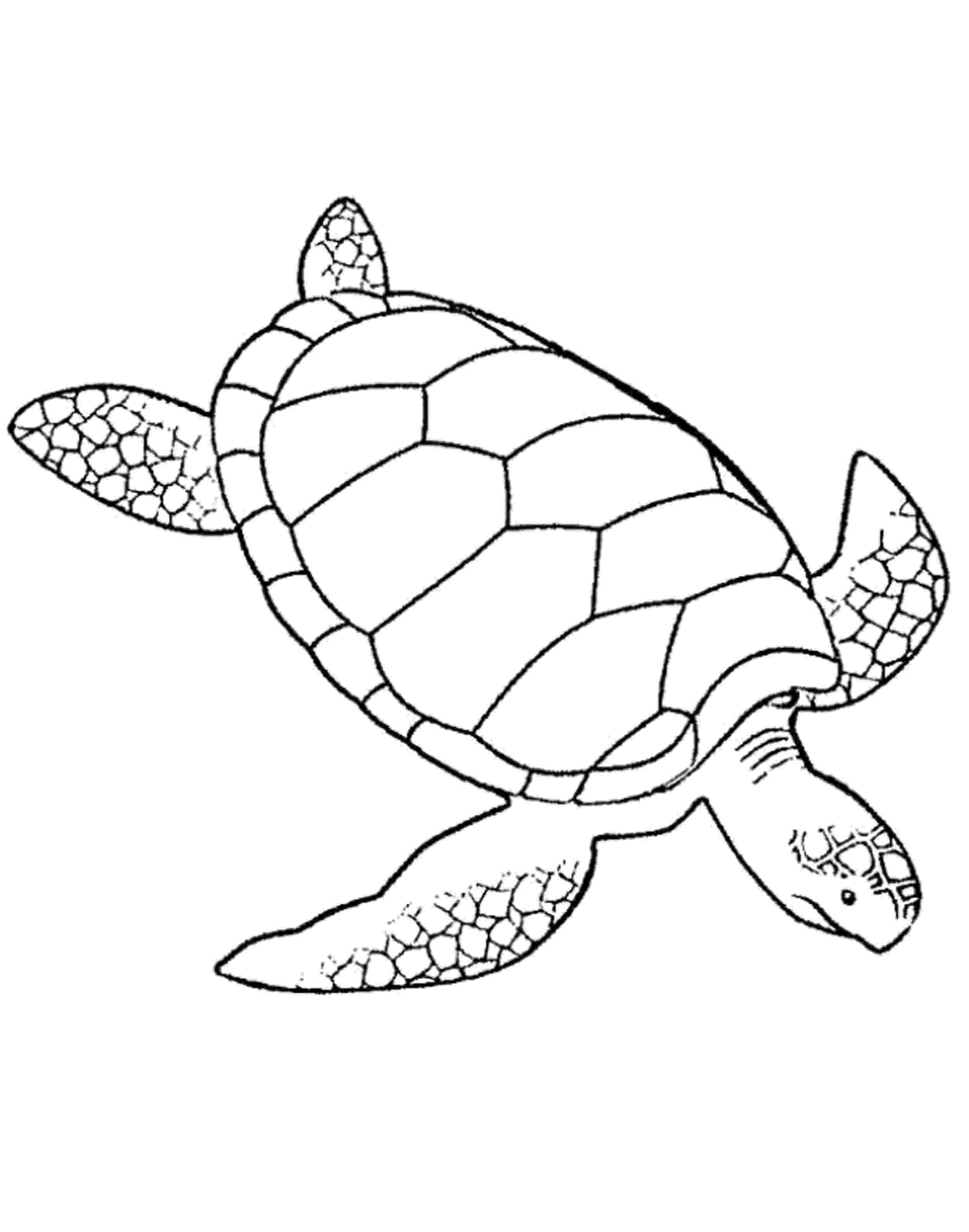 coloring page of turtle turtle coloring pages getcoloringpagescom turtle page of coloring