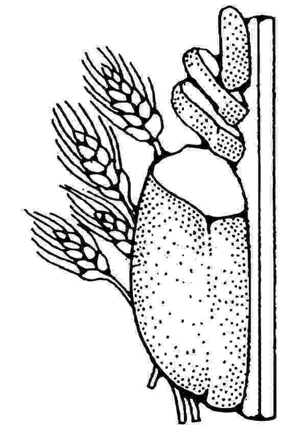 coloring pages bread toast coloring pages bread pages coloring