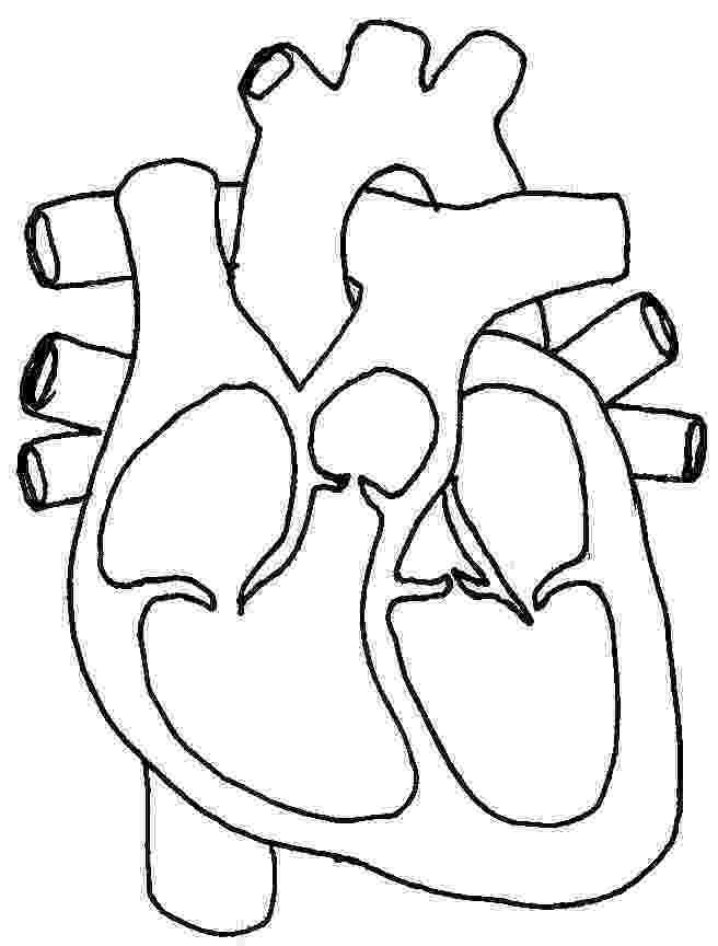 coloring pages circulatory system circulatory system coloring pages coloring pages coloring circulatory system pages