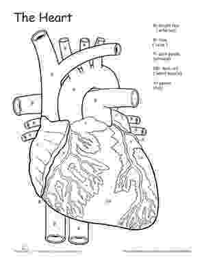 coloring pages circulatory system circulatory system drawing at getdrawingscom free for pages coloring circulatory system