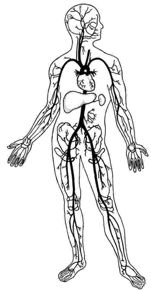 coloring pages circulatory system fillmore fulfilled circulatory system circulatory system coloring pages