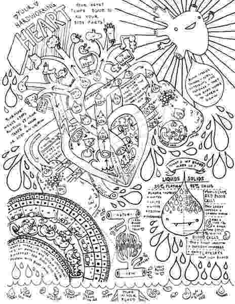 coloring pages circulatory system free stuff i heart guts system coloring pages circulatory
