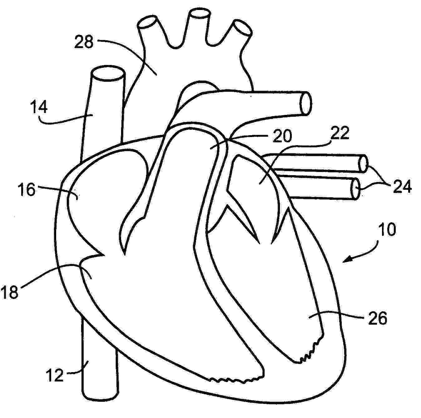 coloring pages circulatory system veins and arteries coloring page study arteries veins circulatory pages coloring system
