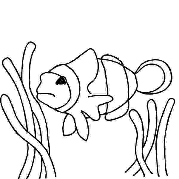 coloring pages clown fish clown fish coloring pages best place to color pages coloring clown fish