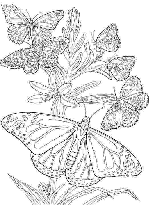 coloring pages for adults butterflies butterflies free to color for kids butterflies kids coloring adults for butterflies pages