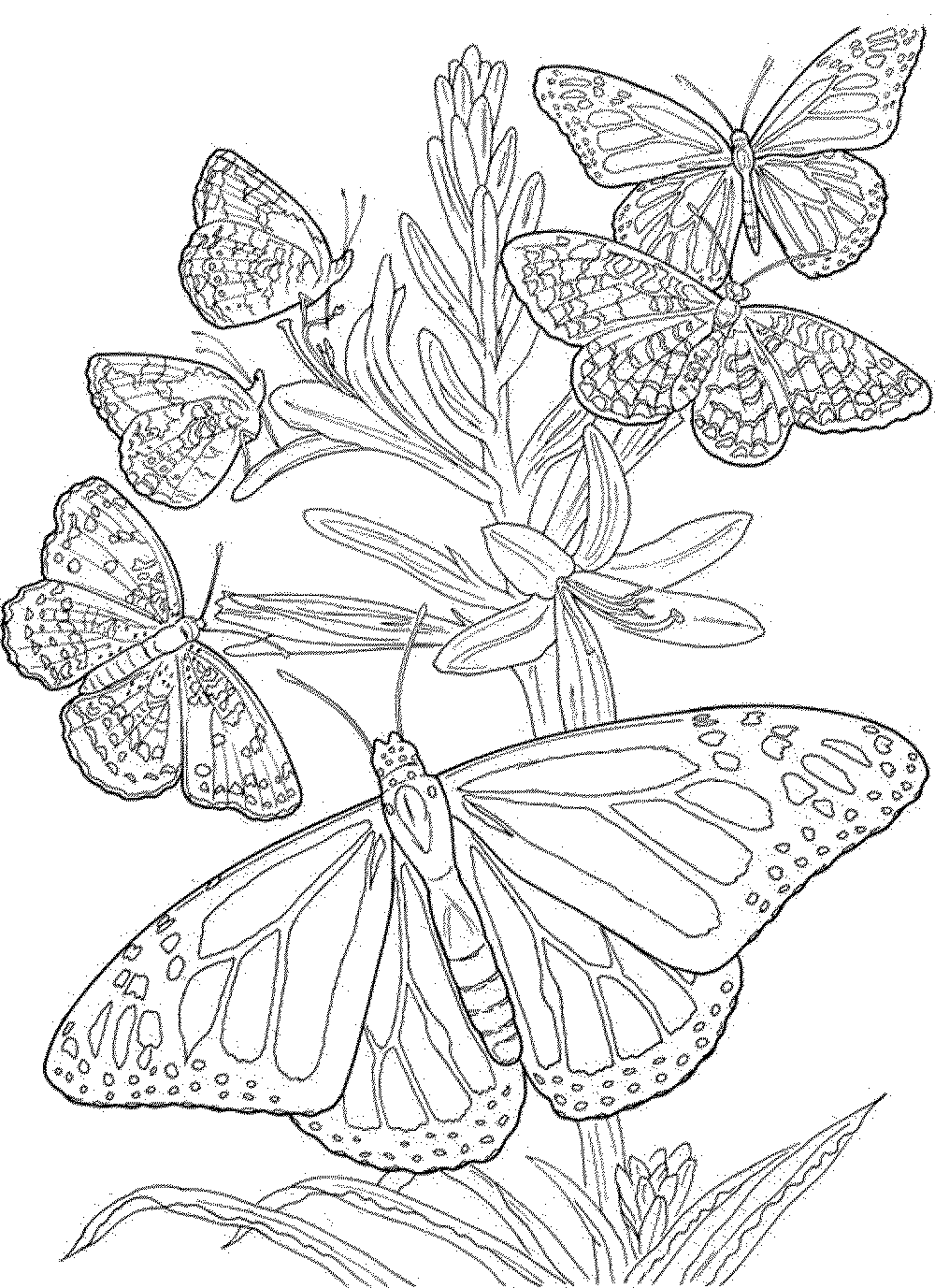 coloring pages for adults butterflies butterfly coloring page adults for coloring pages butterflies