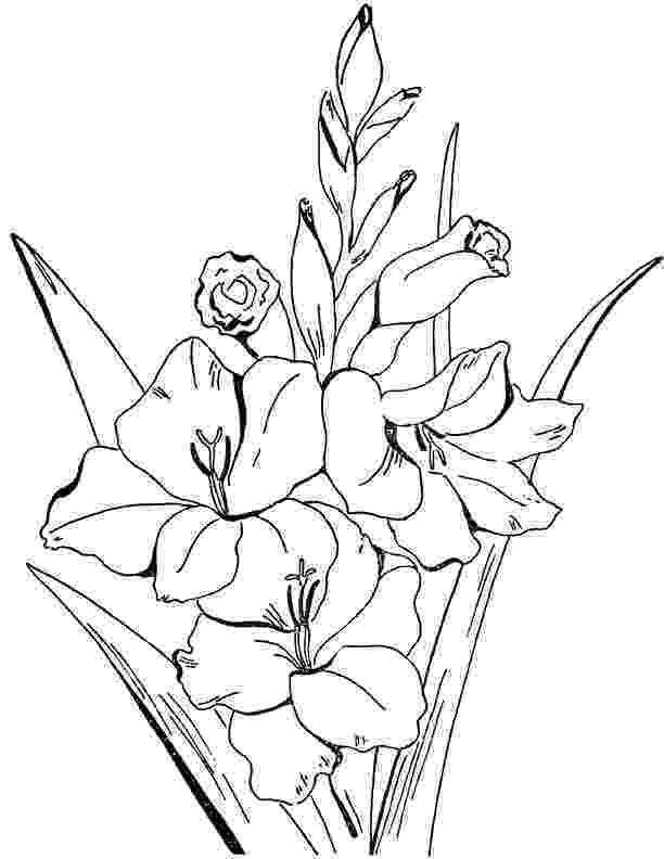 coloring pages for adults to print flowers adult flowers coloring page gladiolus the graphics fairy coloring for flowers pages adults to print