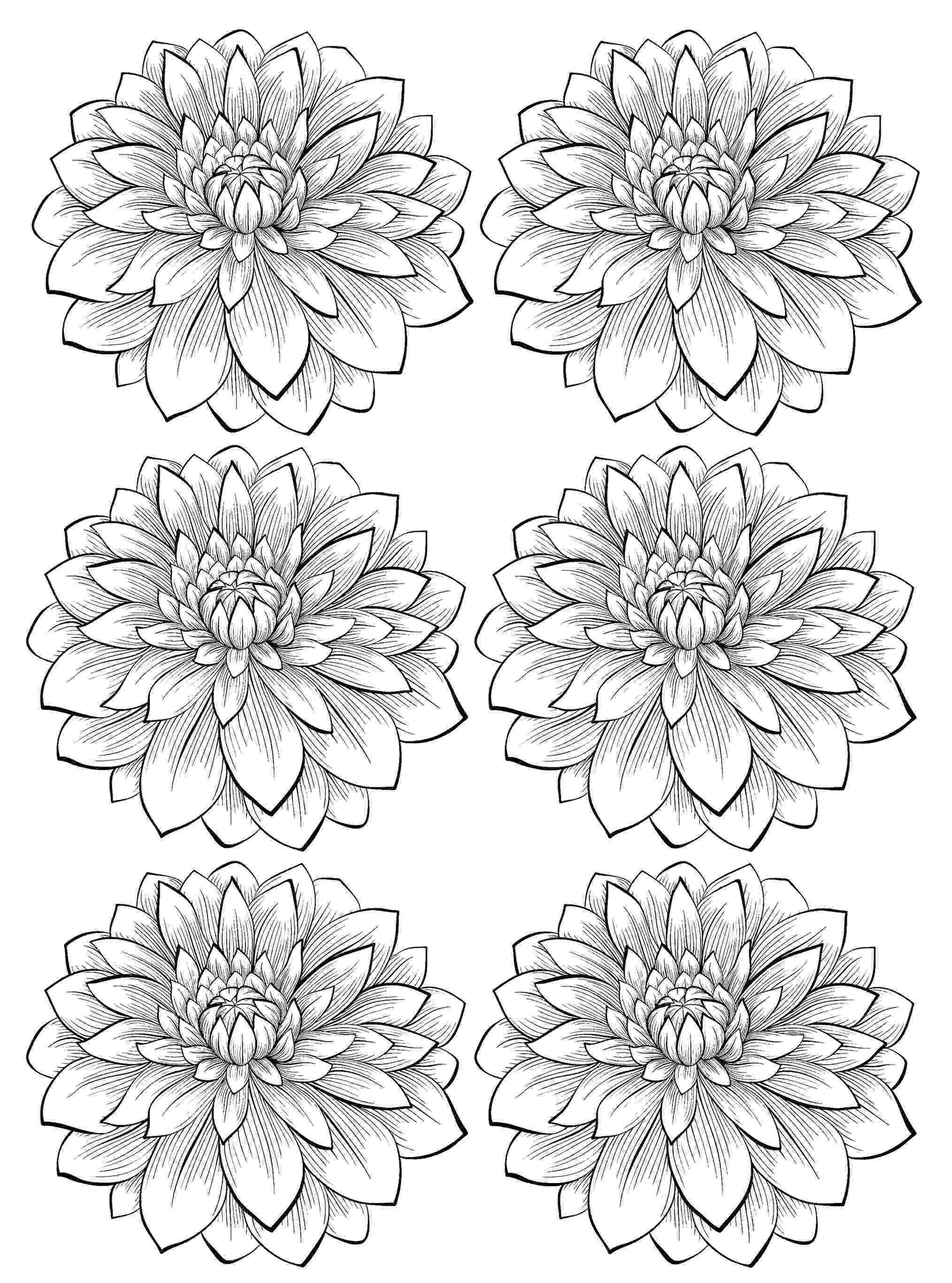 coloring pages for adults to print flowers six dahlia flower flowers adult coloring pages print for to coloring adults pages flowers