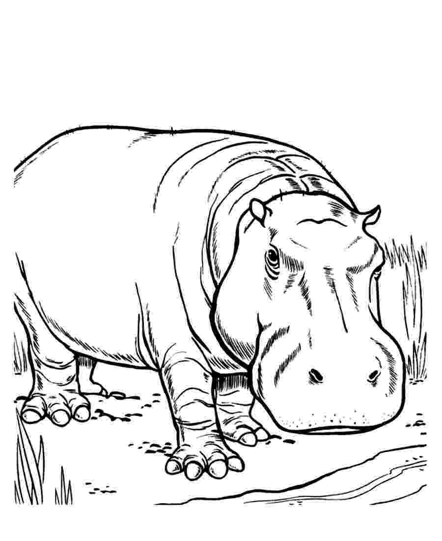 coloring pages hippo hippo coloring pages 360coloringpages coloring pages hippo