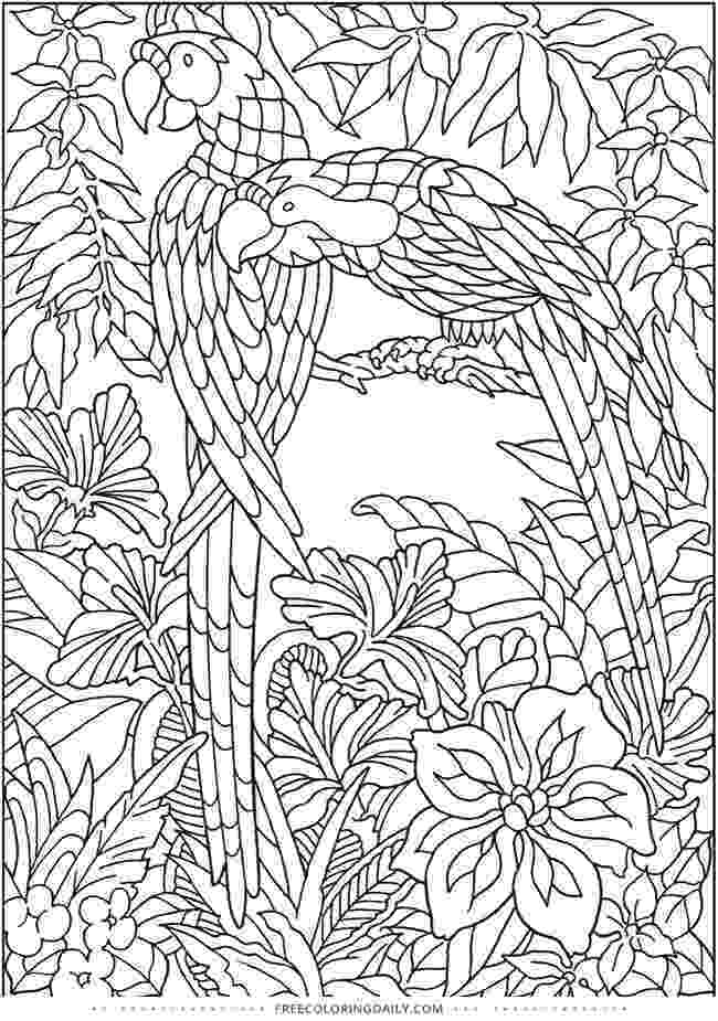 coloring pages jungle 2o awesome jungle coloring pages coloring jungle pages
