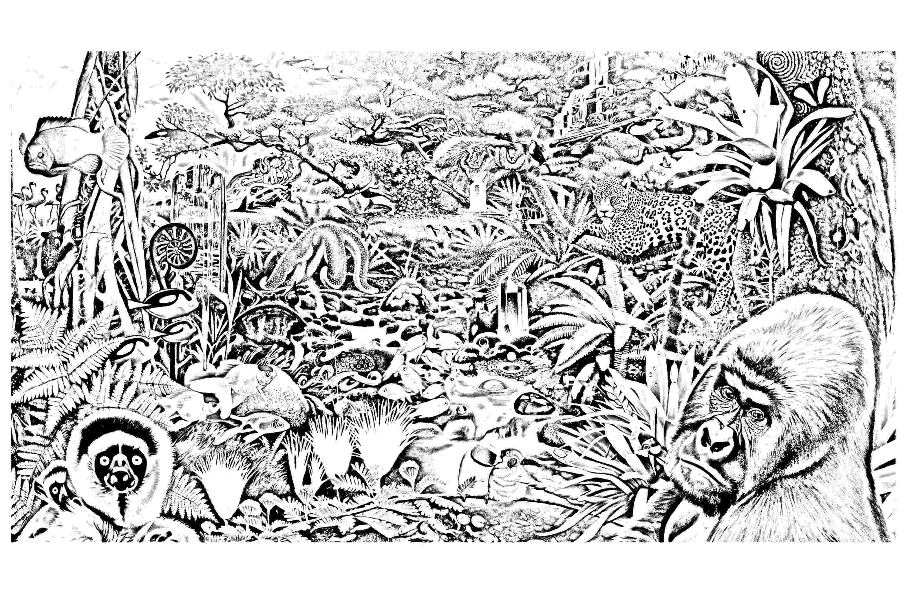 coloring pages jungle jungle scene coloring page free printable coloring pages coloring jungle pages