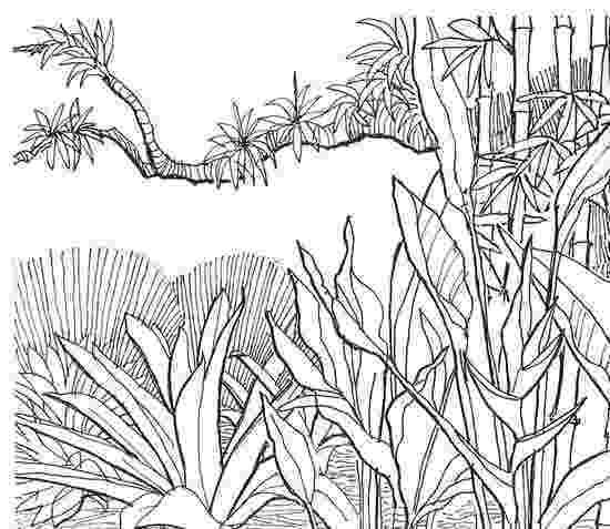 coloring pages jungle jungle tree drawing at getdrawings free download coloring pages jungle