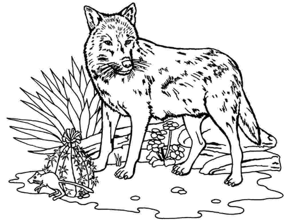 coloring pages of a wolf wolf free to color for kids wolf kids coloring pages coloring a of pages wolf