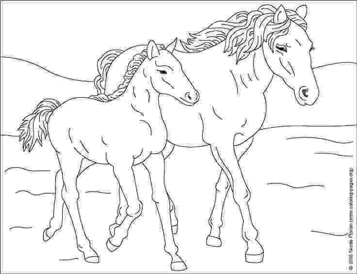 coloring pages of baby horses baby horse drawing at getdrawingscom free for personal horses pages of coloring baby