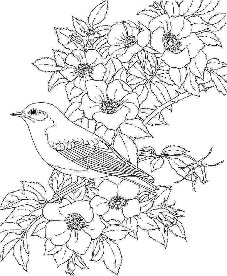 coloring pages of birds and flowers bird with flower coloring page pitara kids network flowers of coloring pages birds and