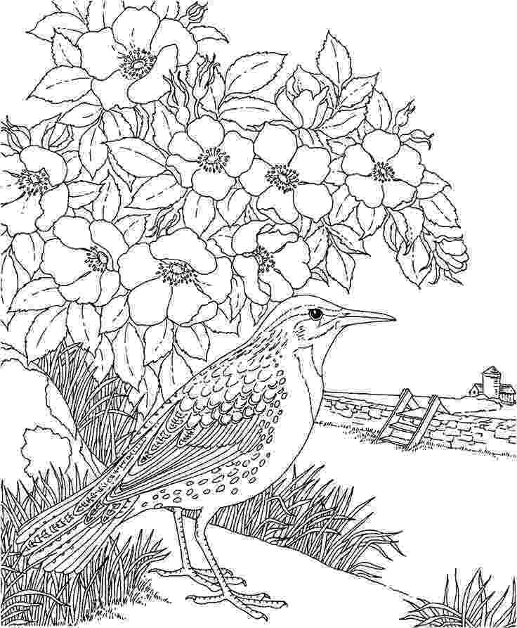coloring pages of birds and flowers free printable coloring pagecolorado state bird and coloring birds and of flowers pages