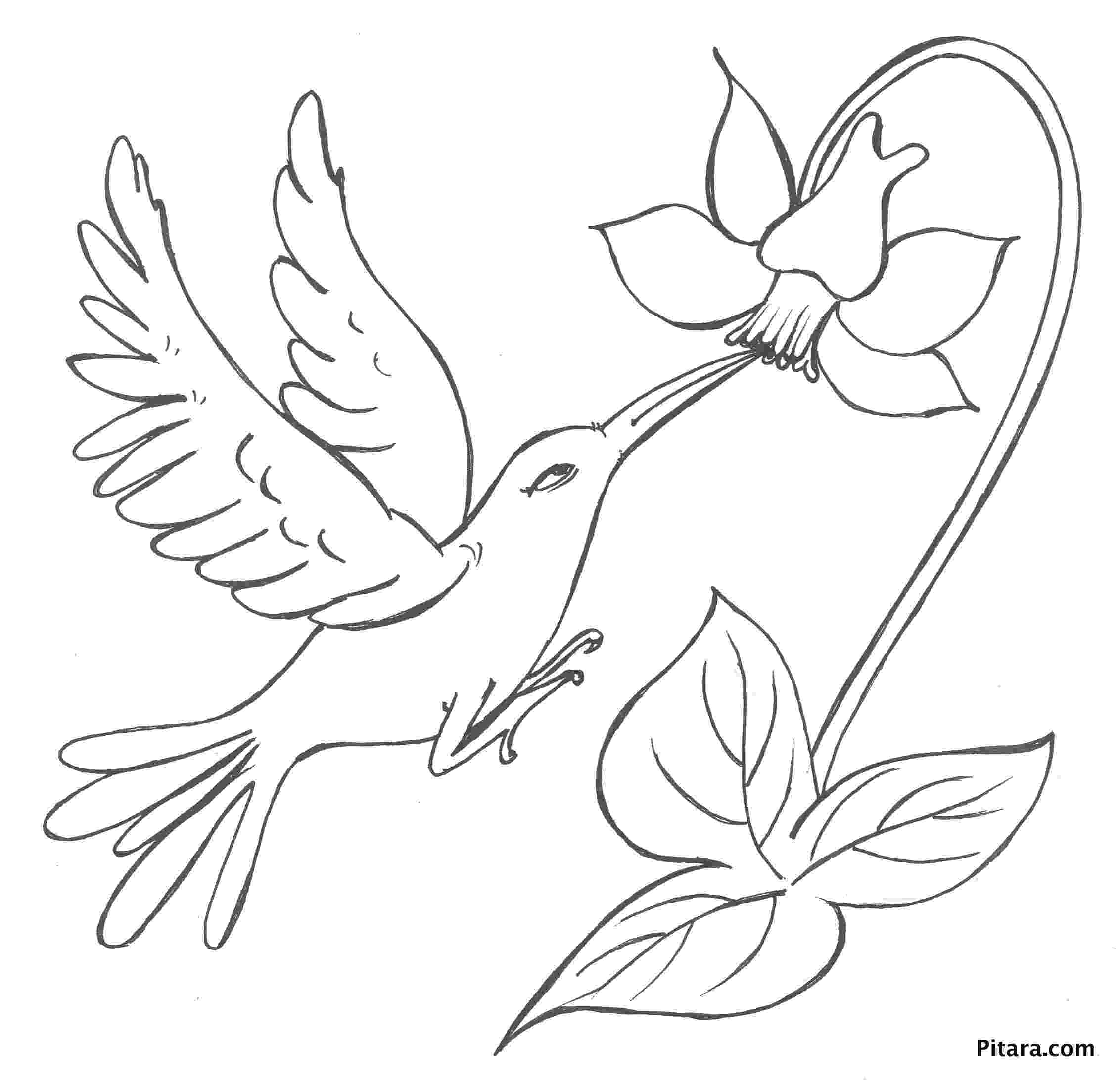 coloring pages of birds and flowers mockingbird and magnolia mississippi state bird and flower birds and coloring of pages flowers