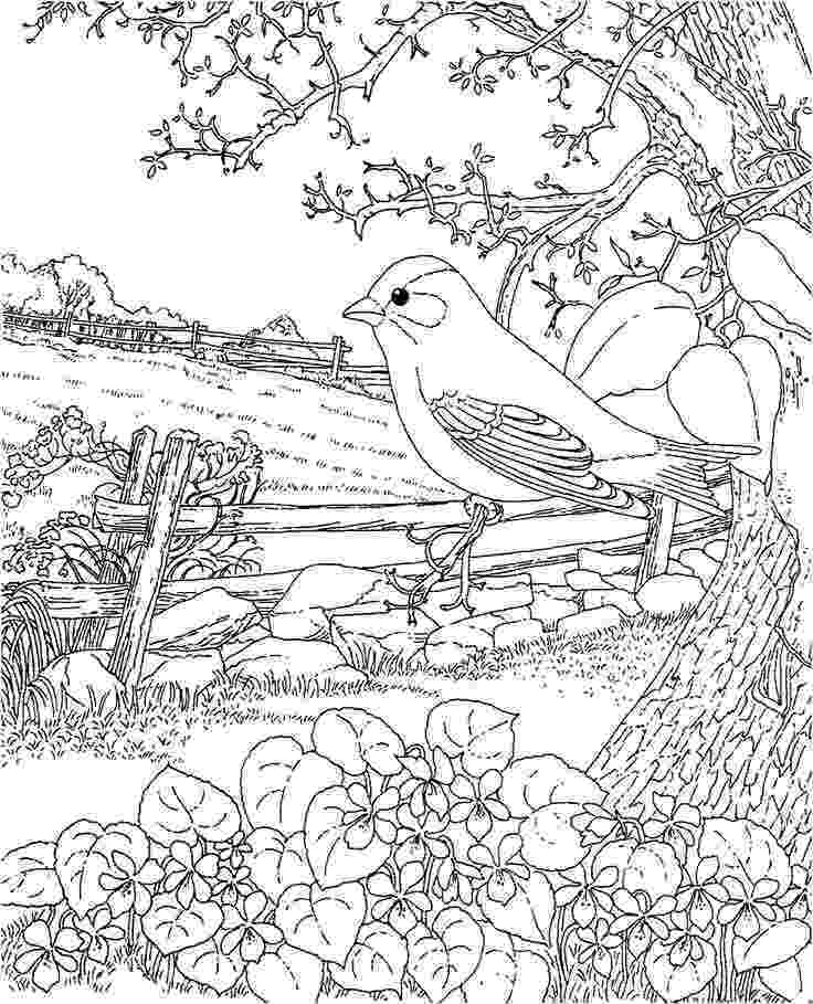 coloring pages of birds and flowers northern cardinal and goldenrod kentucky bird and flower of pages flowers birds and coloring